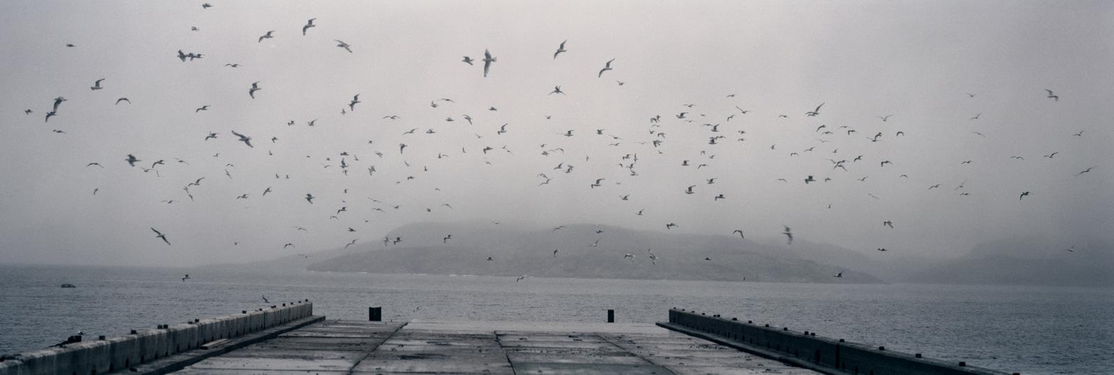 Morze Barensa